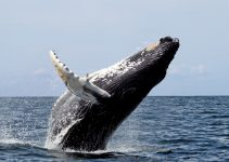whale watching binoculars