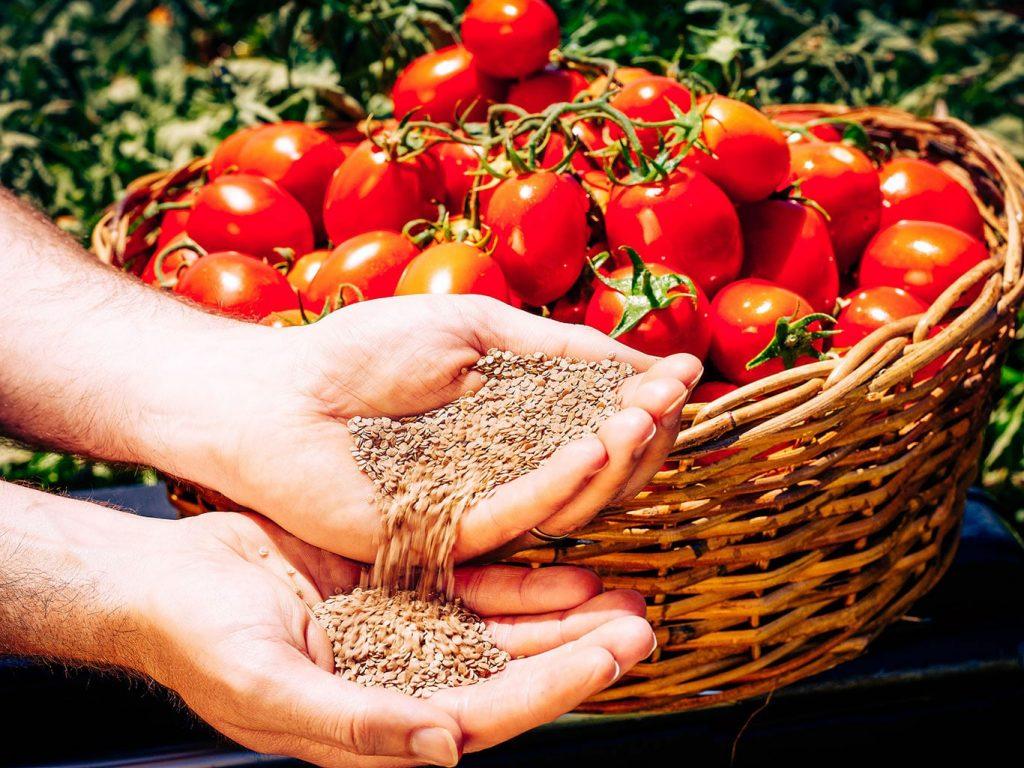 kraft heinz tomatoes